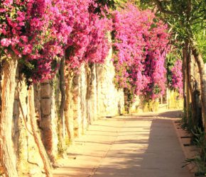 Beautiful narrow stone alley with tropical plants and bright red flowers in summer at resort of Italy in Europe