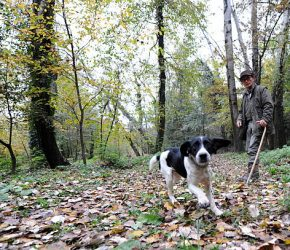 """Renato Agnello, a white-truffle hunter and his dog Gigi search in the woods of Barbaresco near Alba in the Italian northern region of Piemonte on November 7, 2009. 71 year-old Agnello, started to hunt truffles at the age of six with his father in the Alba region, considered to have the best """"tartufo bianco"""" (white truffles) in the world. AFP PHOTO / GIUSEPPE CACACE   (Photo credit should read GIUSEPPE CACACE/AFP via Getty Images)"""