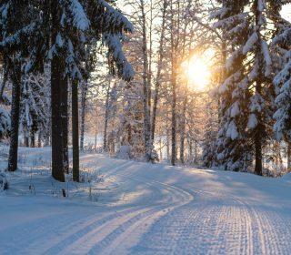 ski-tracks-4763028_1920